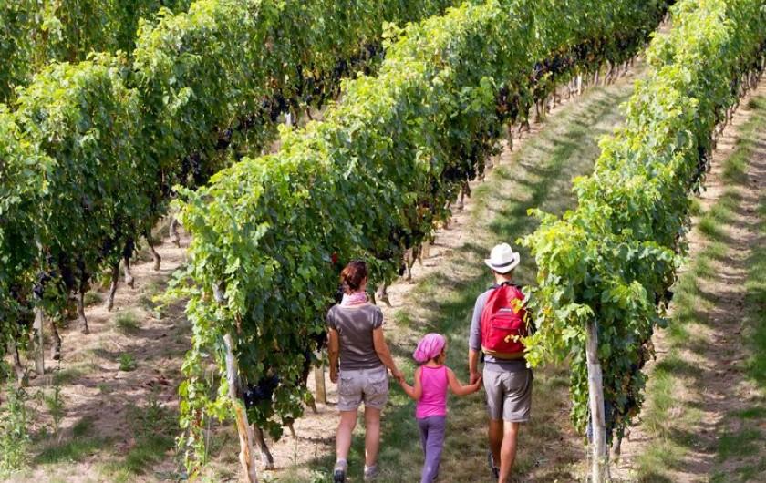 Location de vacances - Chalet à Mauroux - Dans les vignobles de AOC Cahors