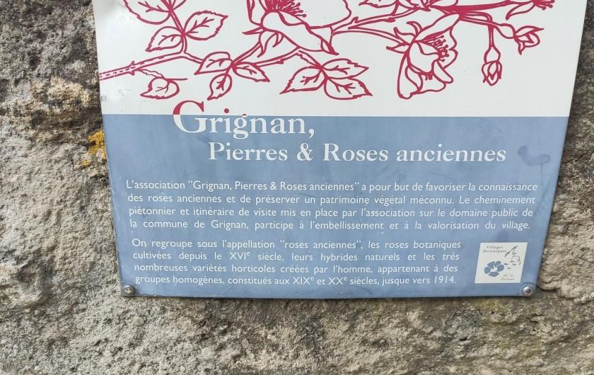 Location de vacances - Gîte à Grillon - Grignan et ses rosiers