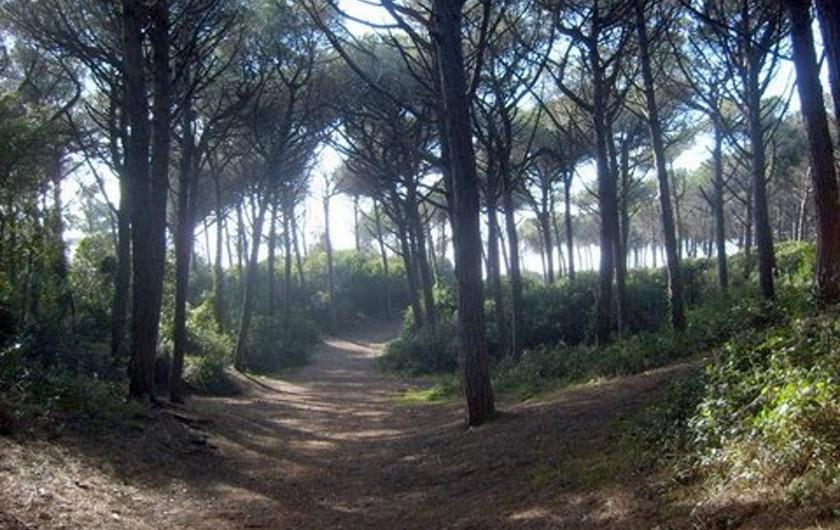 Location de vacances - Appartement à Guardistallo - Pinède très étendue de Cecina mare à Marina di Bibbona