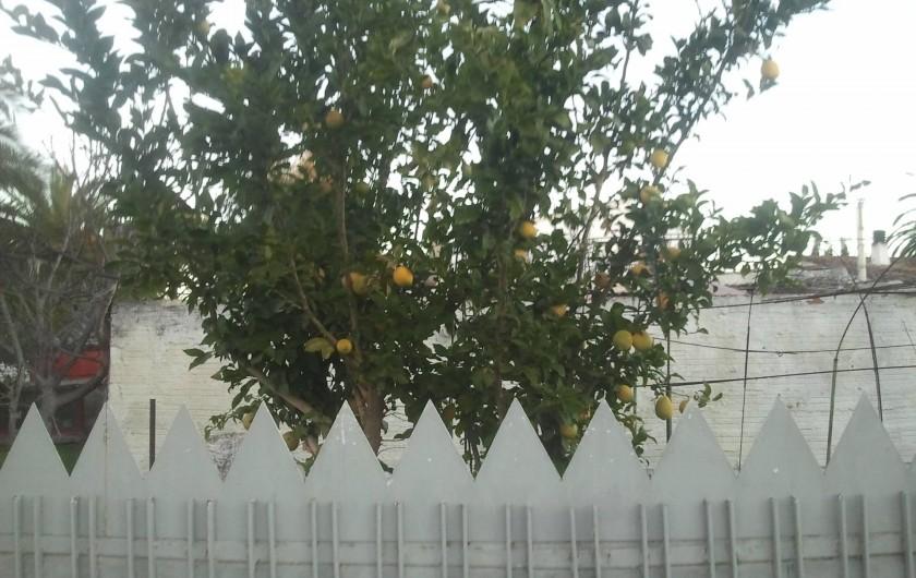 Location de vacances - Appartement à Empuriabrava - en face de l appartement  un citronier