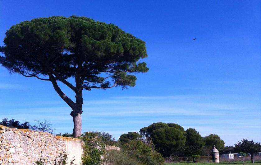 Location de vacances - Mas à Vendres