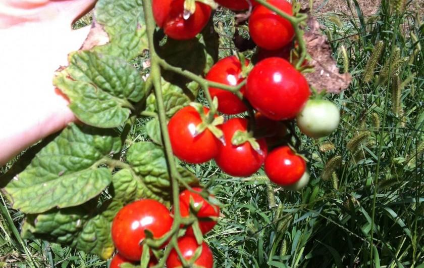 Location de vacances - Appartement à Cecina - notre tomates