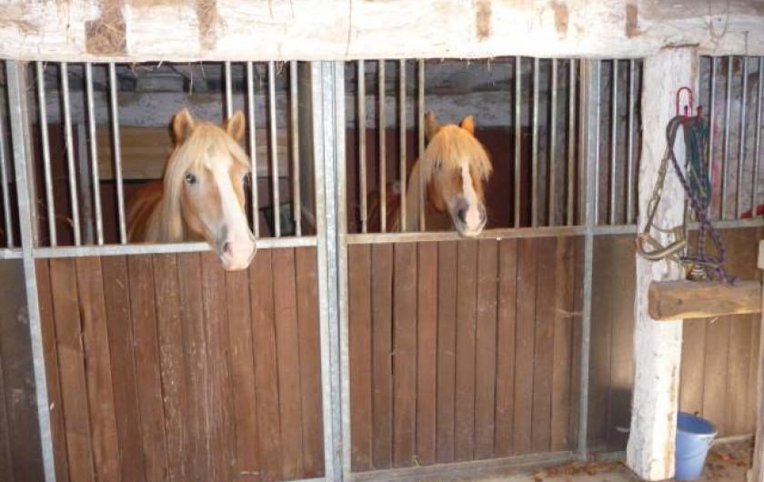 Location de vacances - Maison - Villa à Payrac - Les chevaux dans leurs boxes