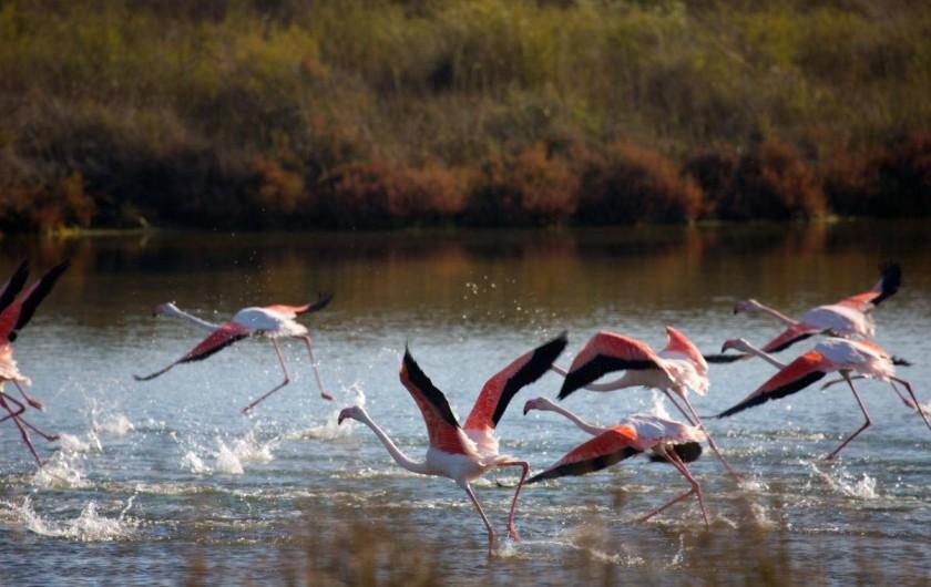 Location de vacances - Gîte à Mollégès - Les Flamands roses en Camargue