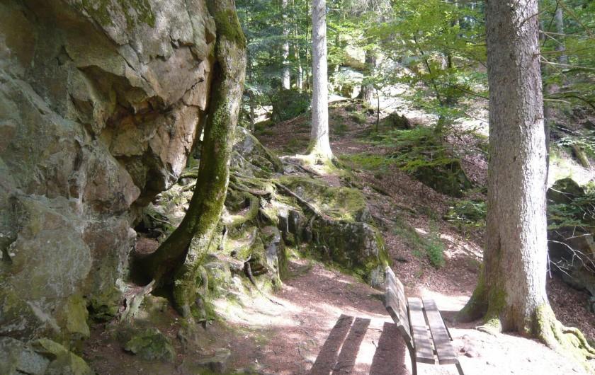 Location de vacances - Chalet à Le Tholy - Un chemin de randonnée à partir du chalet