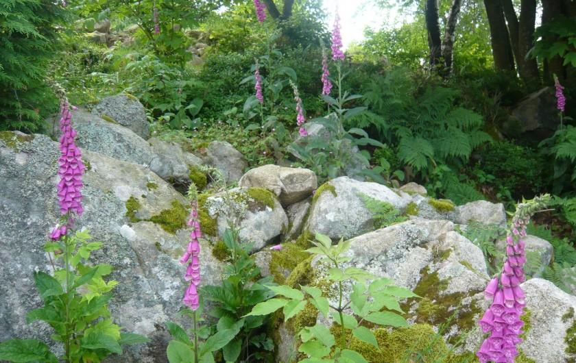 Location de vacances - Chalet à Le Tholy - Les Digitales, fleurs locales
