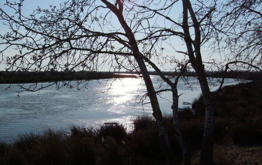 Location de vacances - Mas à Aigues-Mortes