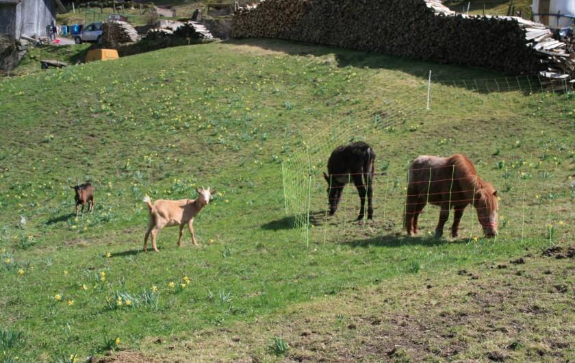 Location de vacances - Gîte à Sapois - Le paradis des animaux