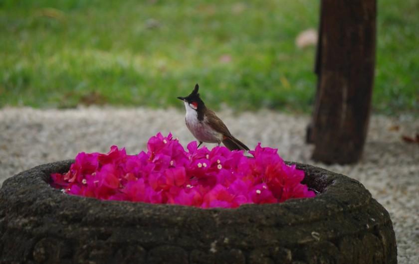 Location de vacances - Villa à Pereybere - Avec les beaux oiseaux surtout au petit déjeuner