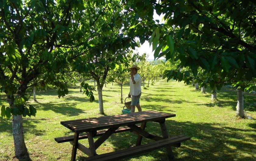 Location de vacances - Chambre d'hôtes à Castelnau-de-Montmiral - le verger  possible pique-nique