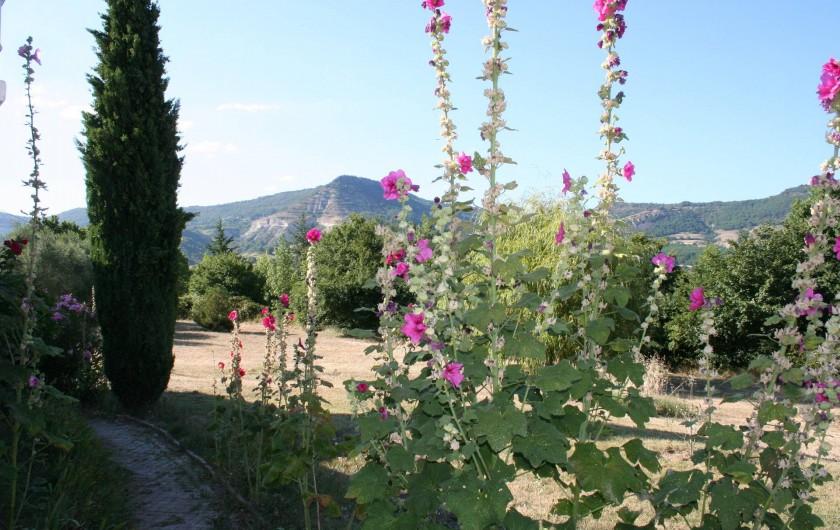 Location de vacances - Villa à Saint-Martin-sur-Lavezon - Roses trémières