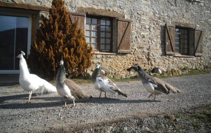 Location de vacances - Maison - Villa à La Motte-du-Caire - Peter et ses chéries