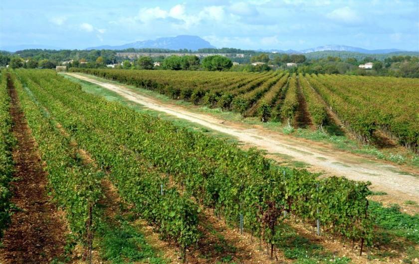 Location de vacances - Gîte à Le Crès - Vue vignoble