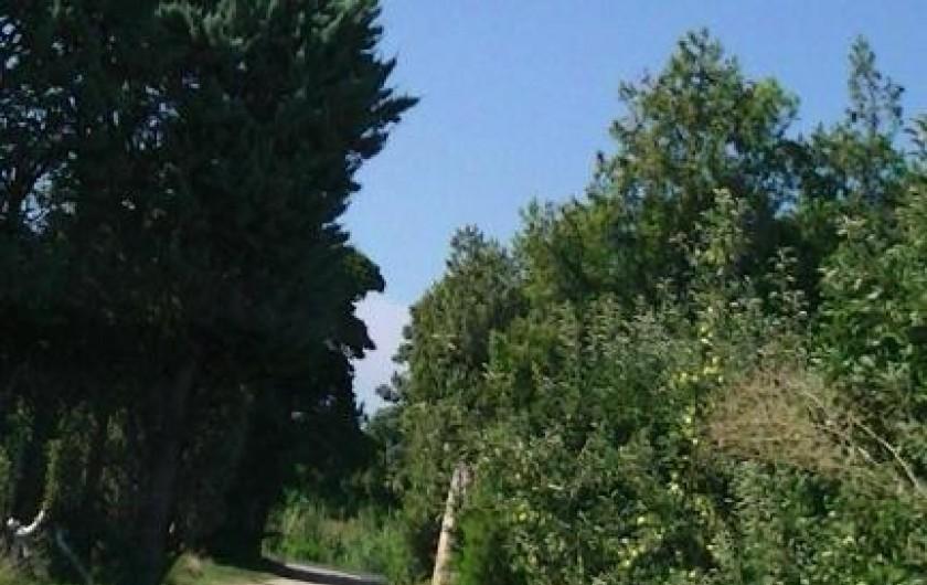 Location de vacances - Villa à Cavaillon