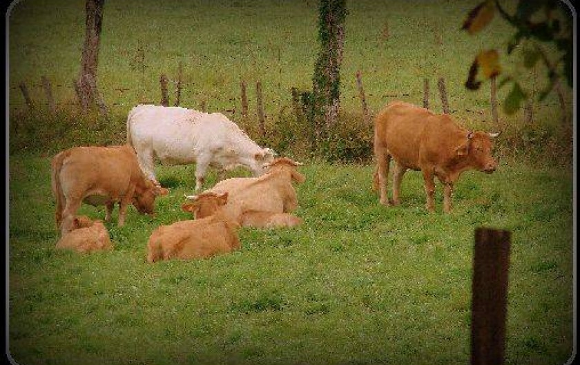 Location de vacances - Gîte à Villecomtal - les animaux