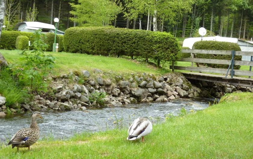 Location de vacances - Chalet à Xonrupt-Longemer - la rivière traversant le camping avec notre couple de canards