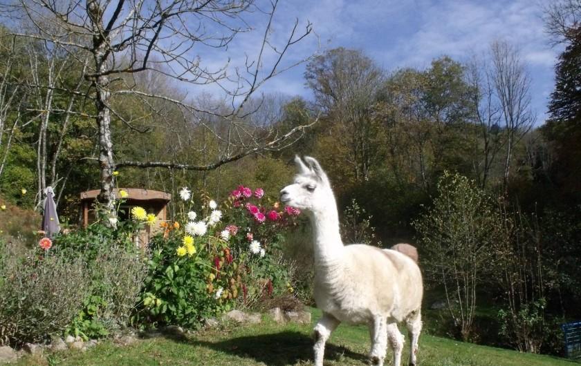 Location de vacances - Gîte à Ferdrupt - Perdo le Lama
