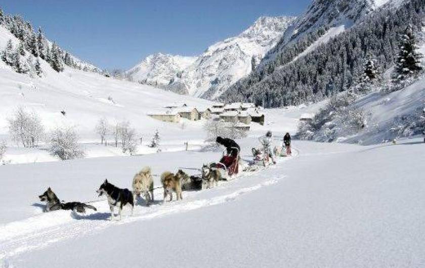 Location de vacances - Appartement à Pralognan-la-Vanoise - Les chiens de traîneaux