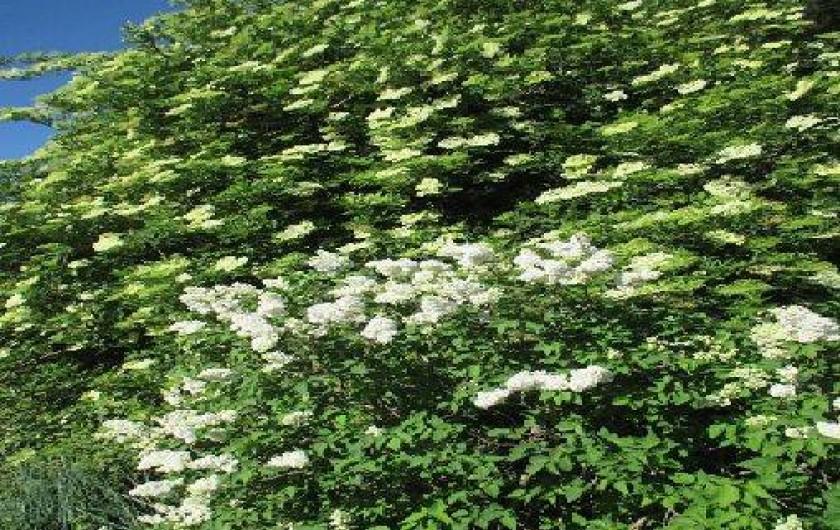 Location de vacances - Gîte à Salon-de-Provence - des arbres fleuris