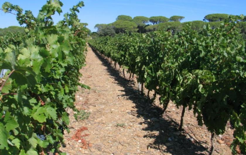 Location de vacances - Gîte à Mirepeisset - Nos Vignes