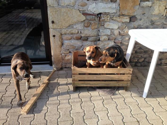 Location de vacances - Chambre d'hôtes à Puybrun - animaux de la maison