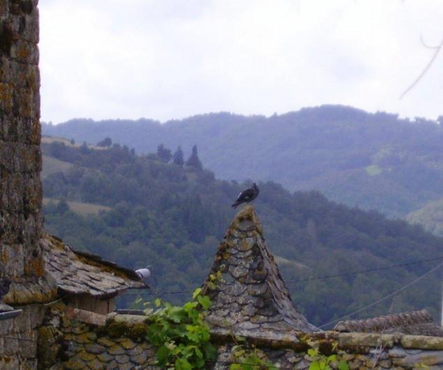 Location de vacances - Gîte à Florentin-la-Capelle - Détails de toits dans le hameau