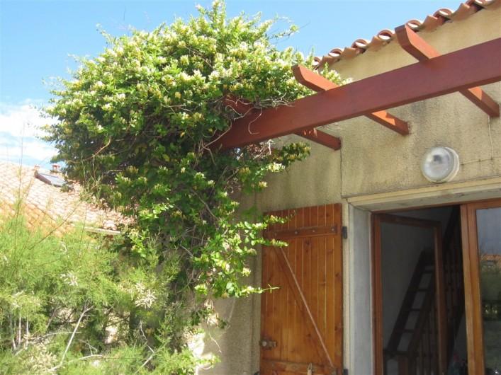 Location de vacances - Maison - Villa à Port Leucate - Chèvrefeuille sur la terrasse
