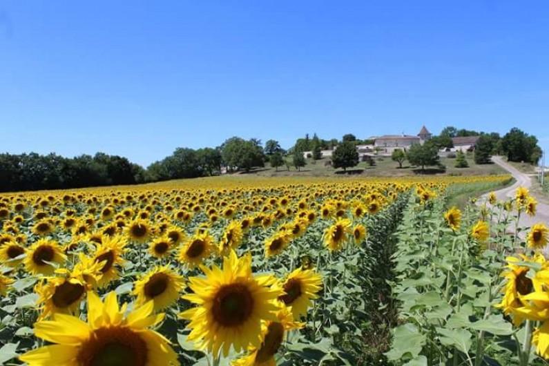 Location de vacances - Chalet à Mauroux - Pays des tournesols & du vin & de foie gras, ... et plein de plus ;)