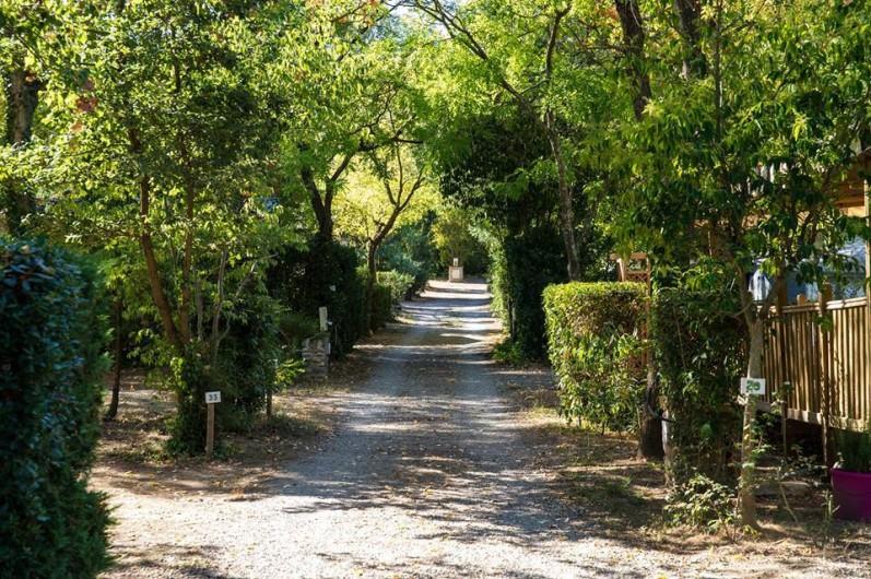 Location de vacances - Bungalow - Mobilhome à Céret - Allée N°3