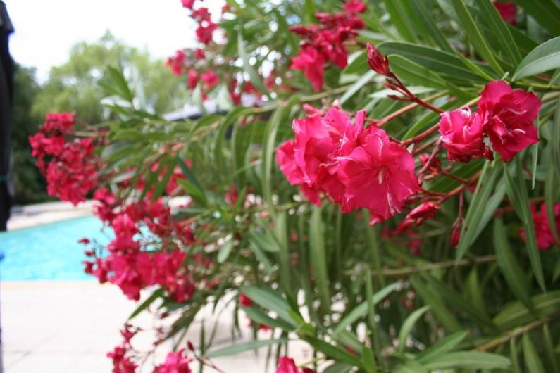 Location de vacances - Mas à Goudargues - Laurier Rose à la piscine