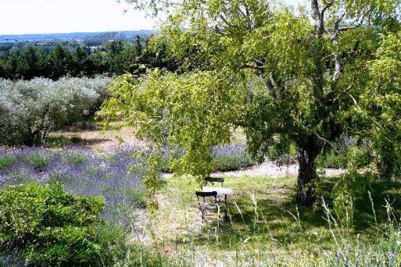 Location de vacances - Gîte à Maussane-les-Alpilles