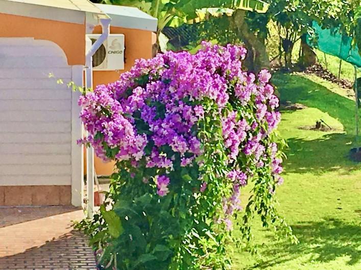 Location de vacances - Villa à Douville - Nombreuses plantes médicinales pour prendre soins de santé.
