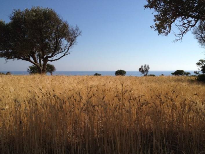 Location de vacances - Appartement à Kato Paphos - En allant à Lara (turtle beach) dans la presqu'île d'Akamas