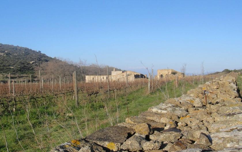 Location de vacances - Appartement à Empuriabrava - PARC NATUREL DU CAP DE CREUS : nombreuses ballades dans vignes, oliviers...