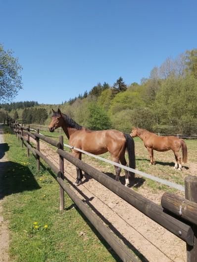 Location de vacances - Gîte à Haut-Fays - Accueil de vos chevaux  (2 paddocks, 2 ha de prairie et 5 boxes en bois)