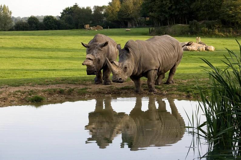 Location de vacances - Insolite à Hermival-les-Vaux - Rhinocéros Blancs