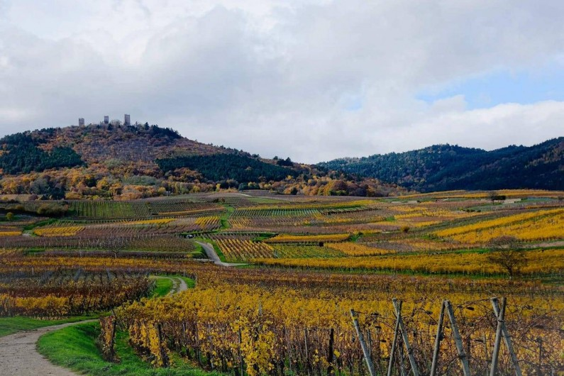 Location de vacances - Chalet à Anould - Les vignes Alsace pas loin du chalet