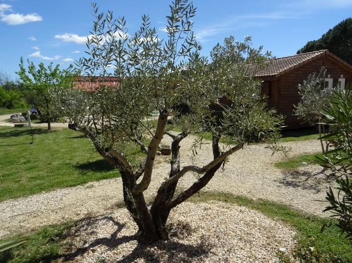 Location de vacances - Gîte à Ruoms - terrasse Merlot