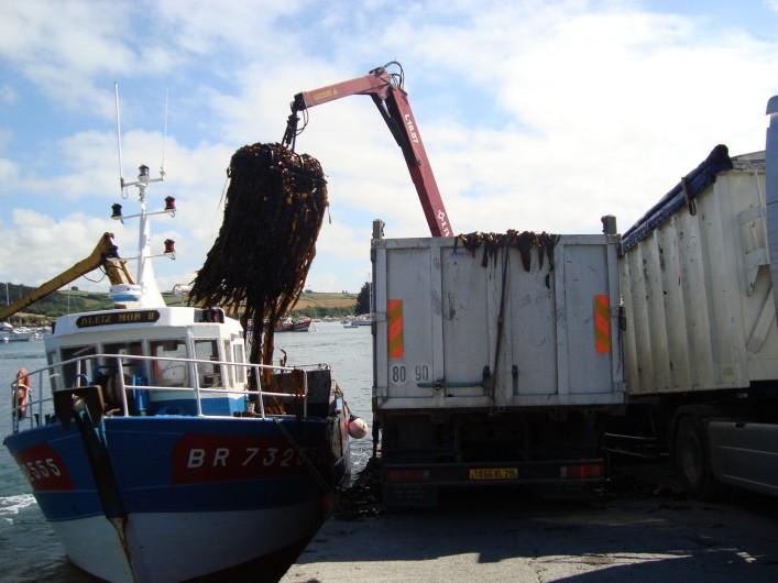 Location de vacances - Gîte à Brélès - Déchargement d'algues à Lanildut 1er port goémonier d'Europe.