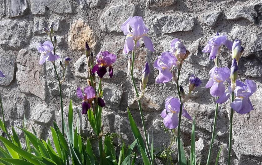 Location de vacances - Chalet à Vaujany - Flowers in the garden