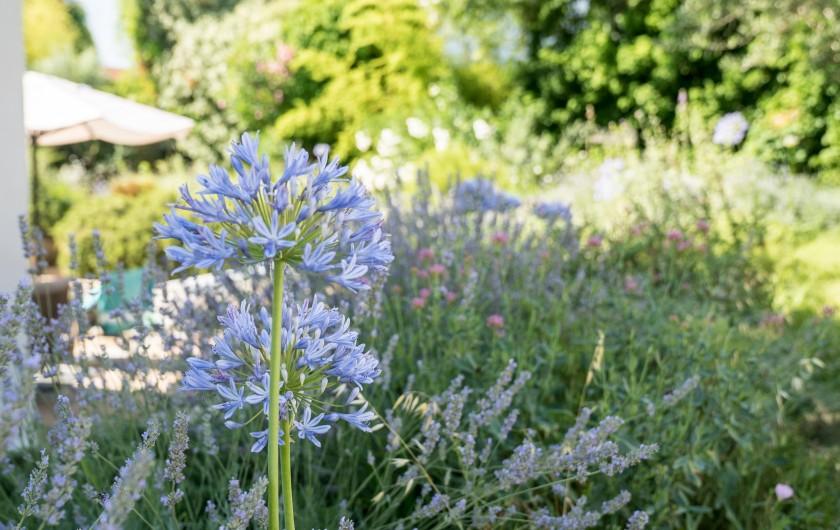 Location de vacances - Mas à Montpellier - Jardin paysagé
