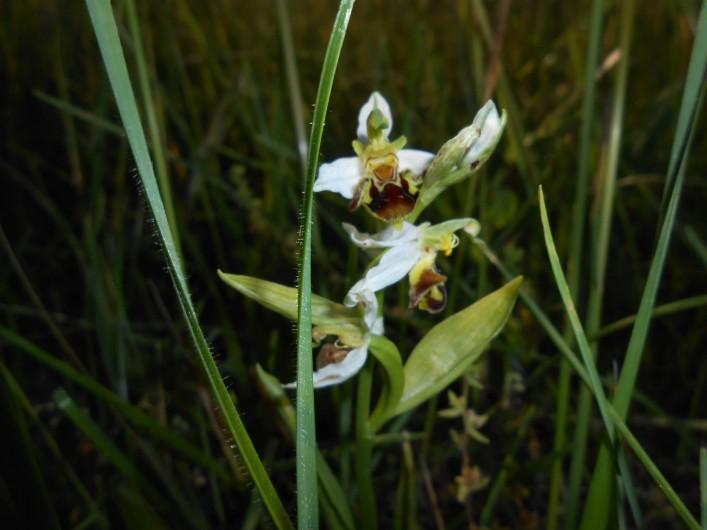 Location de vacances - Bungalow - Mobilhome à Le Buisson-de-Cadouin - Dans notre jardin fleurissent de nombreuses orchidées