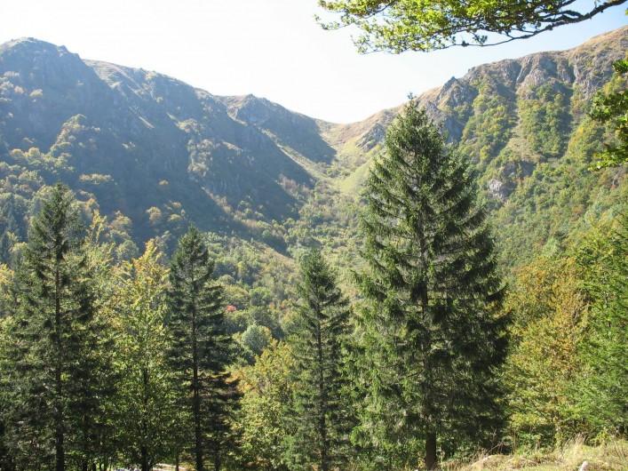 Location de vacances - Chalet à Basse-sur-le-Rupt - La réserve naturelle nationale de Frankenthal-Missheimle
