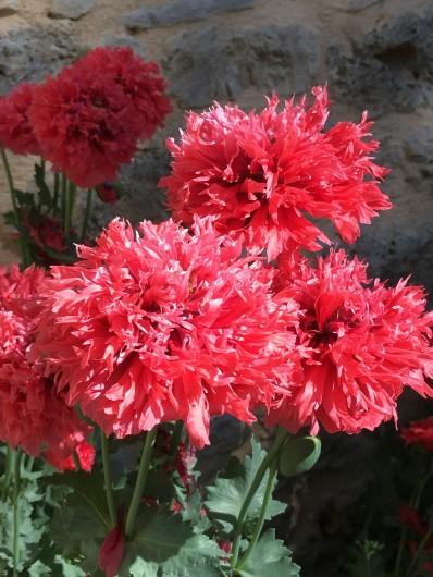 Location de vacances - Gîte à La Rouquette - Un printemps très fleuri
