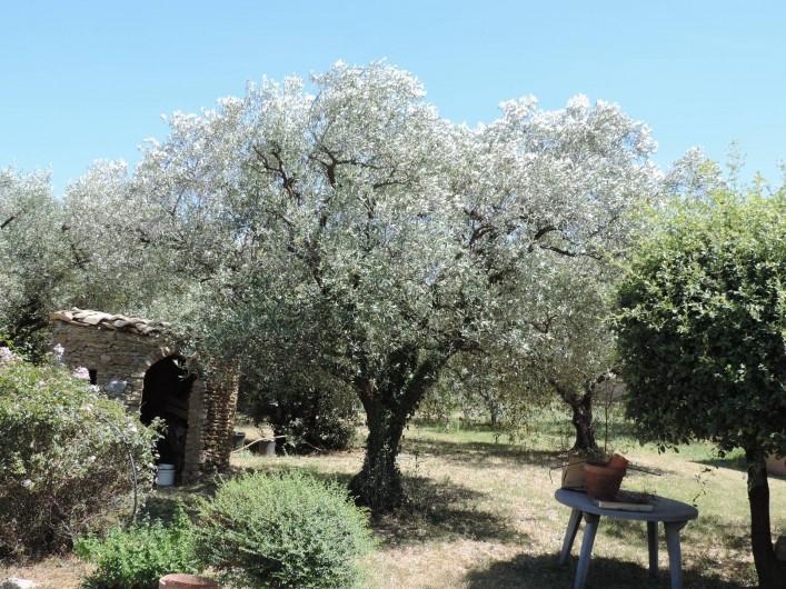 Location de vacances - Villa à Mirabel-aux-Baronnies - Les oliviers