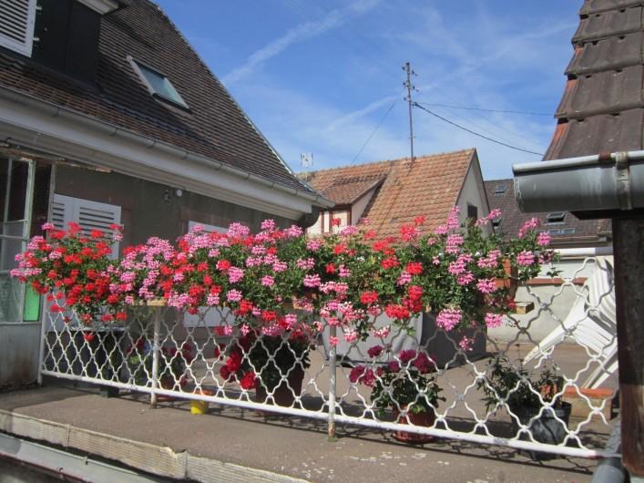 Location de vacances - Gîte à Sigolsheim