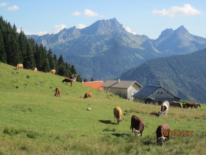 Location de vacances - Chalet à Bellevaux - Alpages de la Molletaz  et Pte de Challune     2120 m