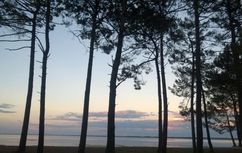 Location de vacances - Villa à Biscarrosse Plage - Pinède au bord du Lac ce Cazeaux