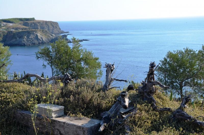 Location de vacances - Appartement à Cerbère - Pose devant la méditerranée