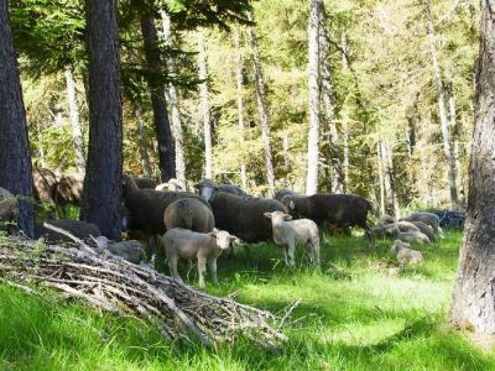 Location de vacances - Appartement à La Joue du Loup - Le printemps à la Joue du Loup